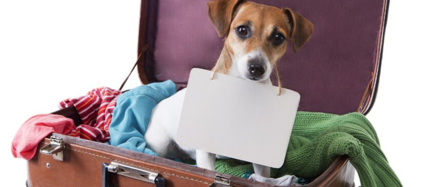 Are Pets Allowed on Travel Assignments?