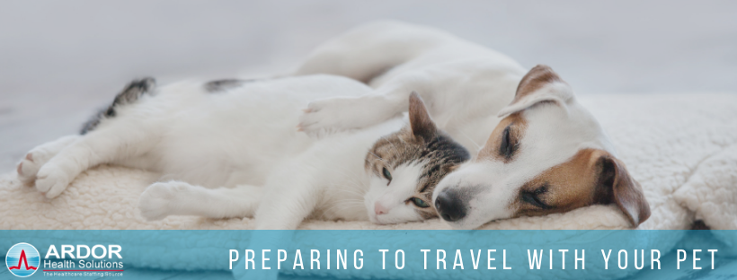 Travel With Your Pet On Your Next Assignment!
